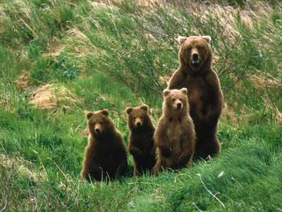bear-attack-4
